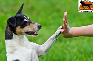 Talleres de adiestramiento canino