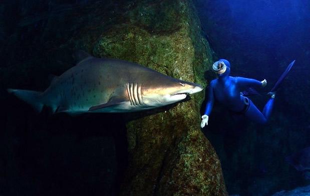 Visita el aquarium de roquetas de mar descuento 25 for Precio entrada aquarium