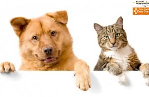 Vacuna antirrábica para tu mascota